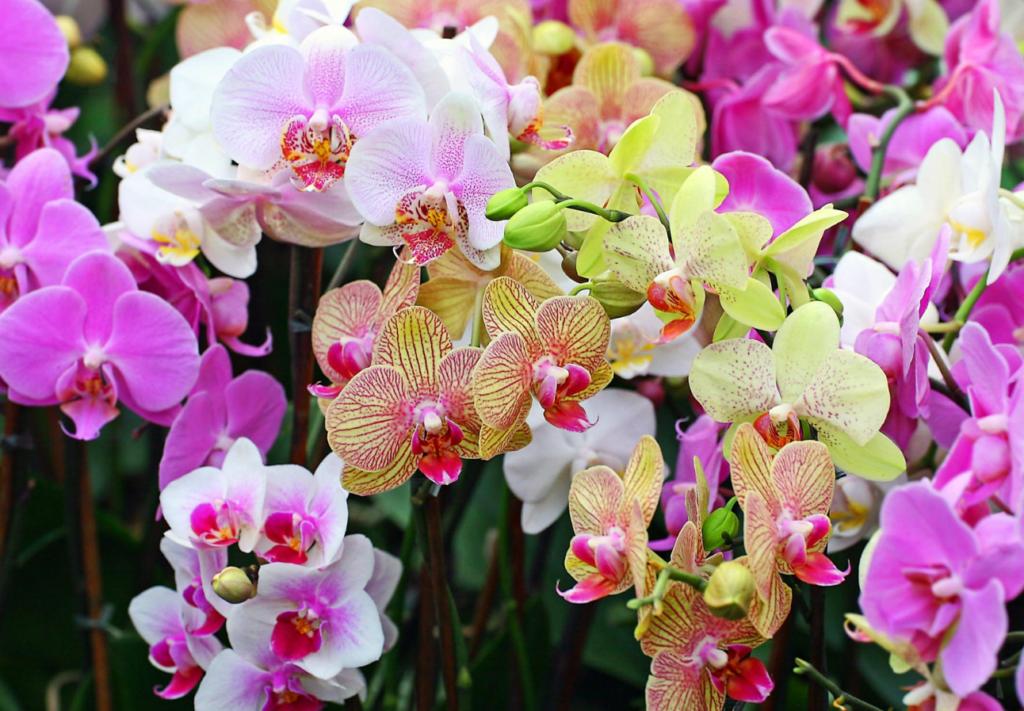 бизнес на выращивании орхидей