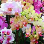 Как организовать бизнес на выращивании орхидей