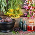 Лечебные травы для мягкой чистки печени